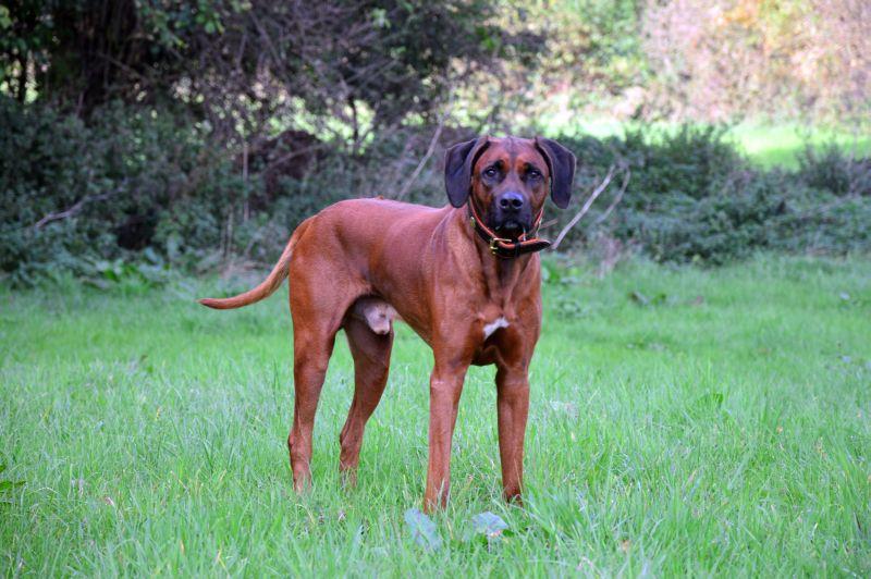 Bravo Topsecret Adhiambo, mit 9 jahren sieht er noch aus wie ein junger Hund <3