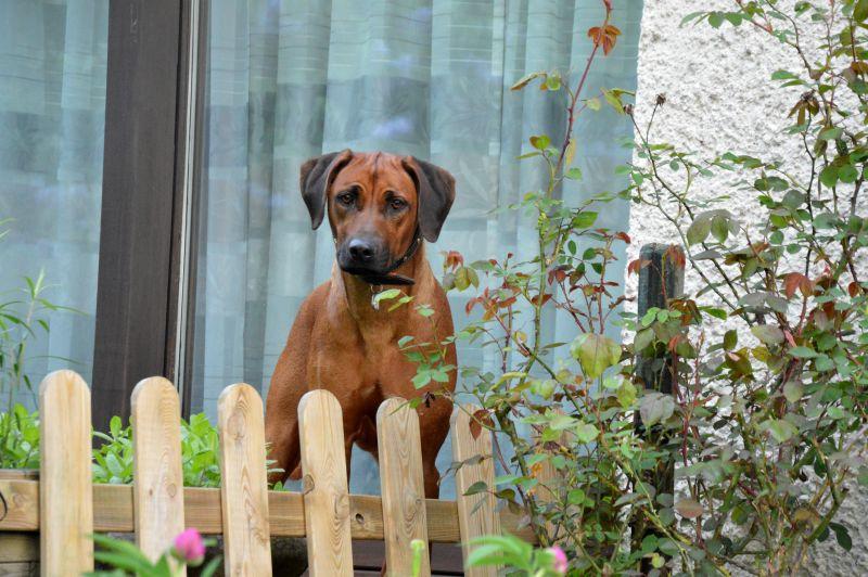 Frieda freut sich: Gleich geht's auf zum Spaziergang