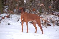 familie-fritzi-hunde-weihnachten2010-110