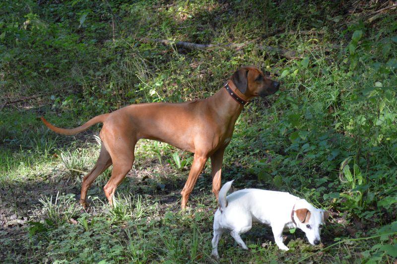 Da raschelt es doch im Wald. Senta ist noch rank und schlank.