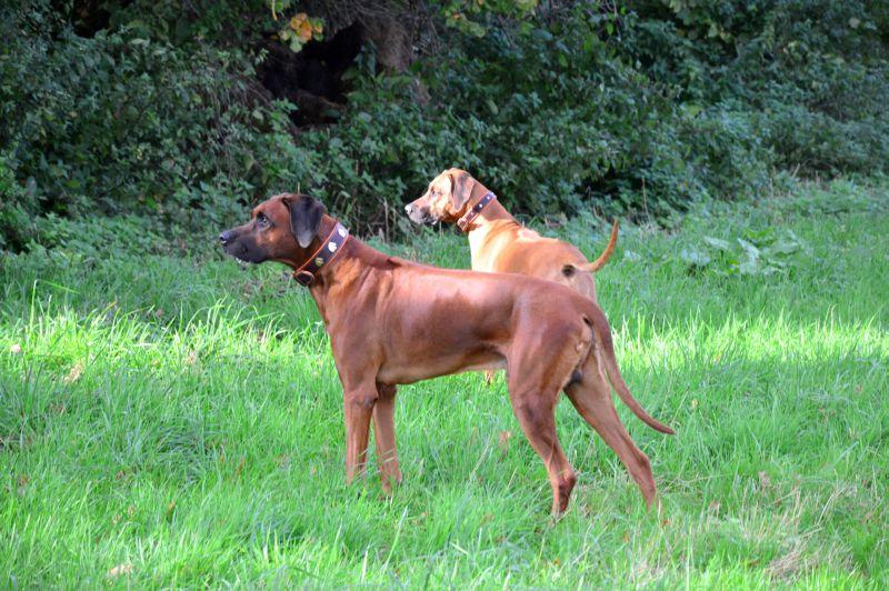 In Habachtstellung: Adhiambo und Senta