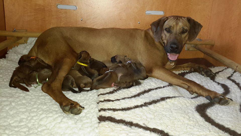 Nele und ihre frisch geborenen Adhiambo-Kinder